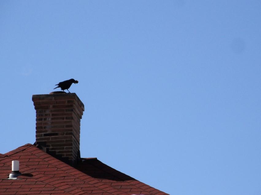 Crow on chimney