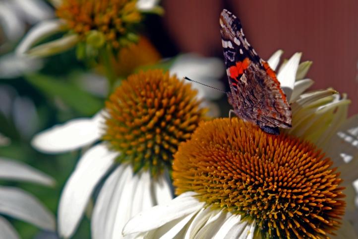 Pollinater
