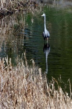 Powderhorn Lake, Minneapolis, 2010, by Gayla Ellis